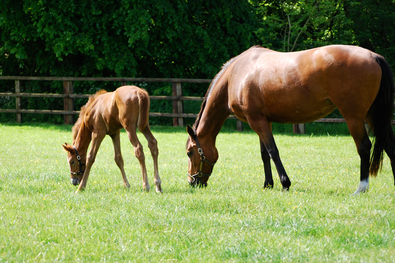 Stud and reproduction services, Bourton Vale Equine Clinic, Gloucestershire