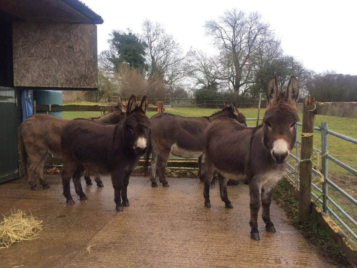 Bourton Vale Equine Clinic Vets Out And About