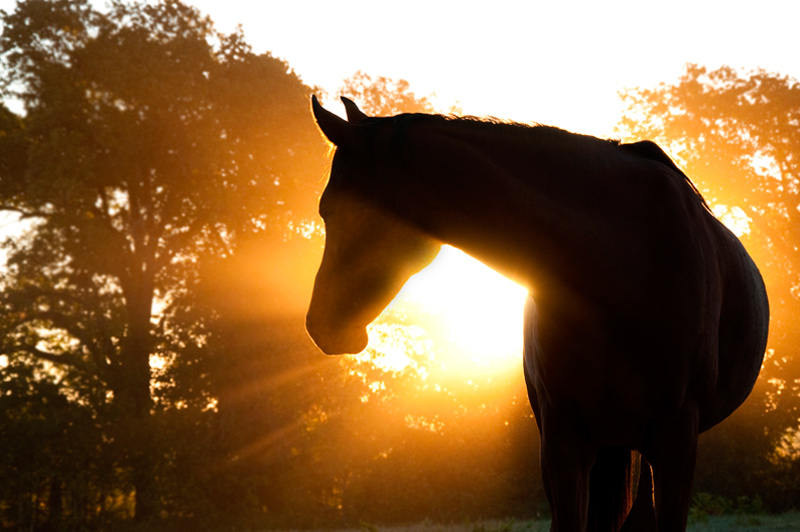 Leisure horse veterinarians, Bourton Vale Equine Clinic, Gloucestershire